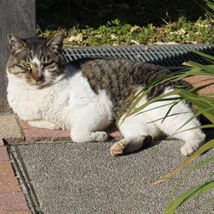 不動前緑道公園のネコ
