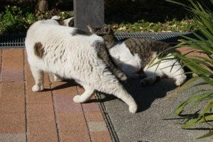 不動前緑道公園のネコ1匹逃げる