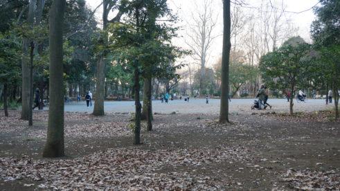 林試の森公園の広場
